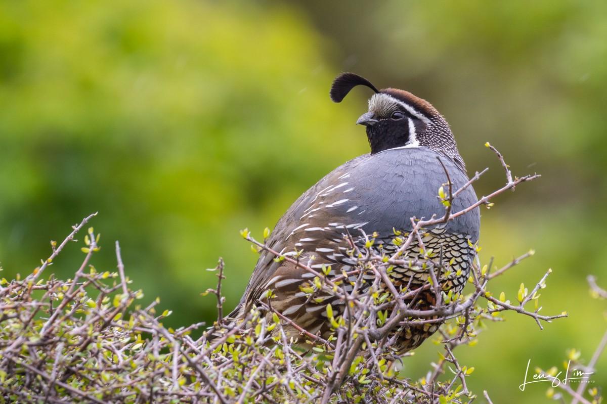 Wildlife Encounters in New Zealand (PartI)