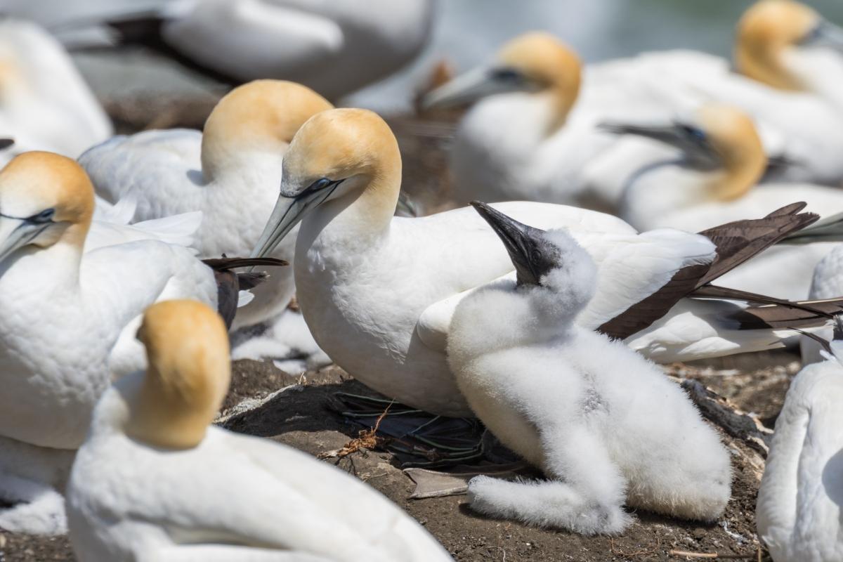 Wildlife Encounters in New Zealand (PartIII)